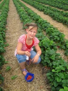 Aardbeien plukken 2